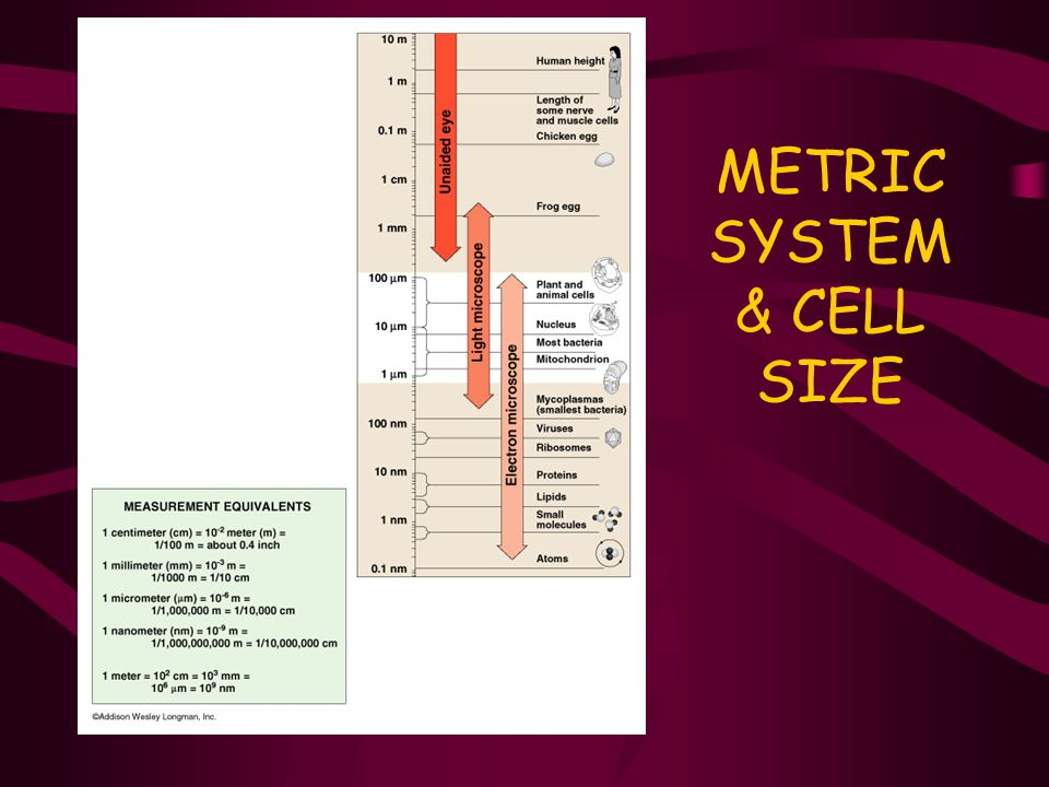 METRIC SYSTEM & CELL SIZE