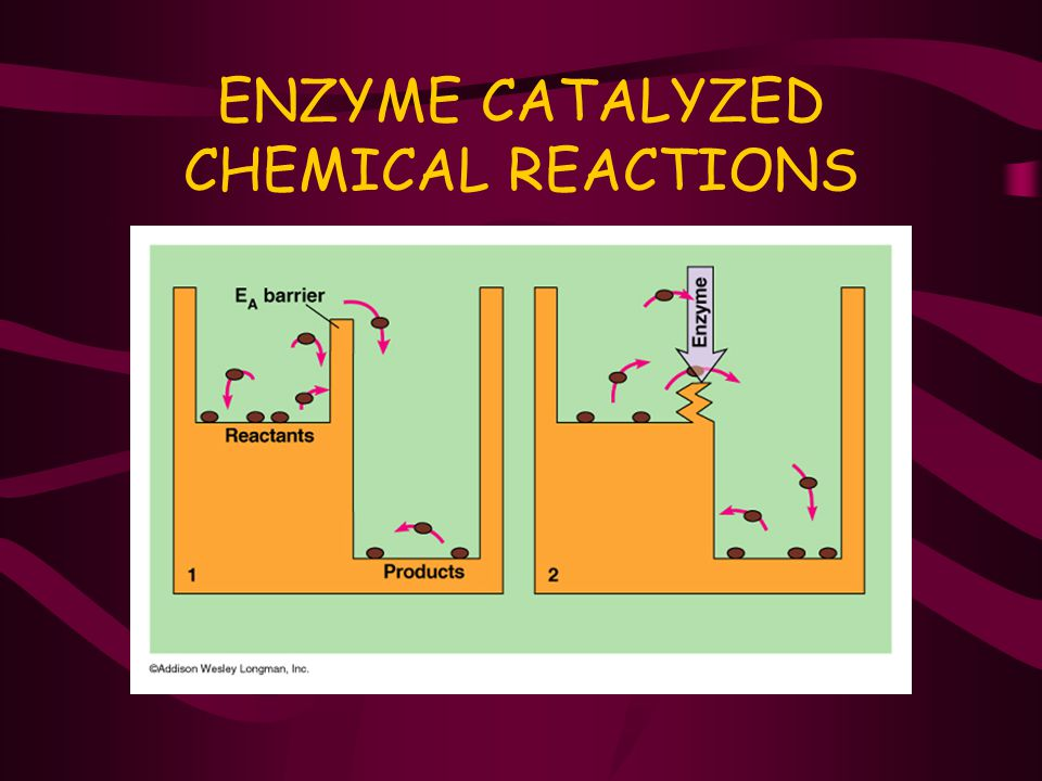 ENZYME CATALYZED CHEMICAL REACTIONS