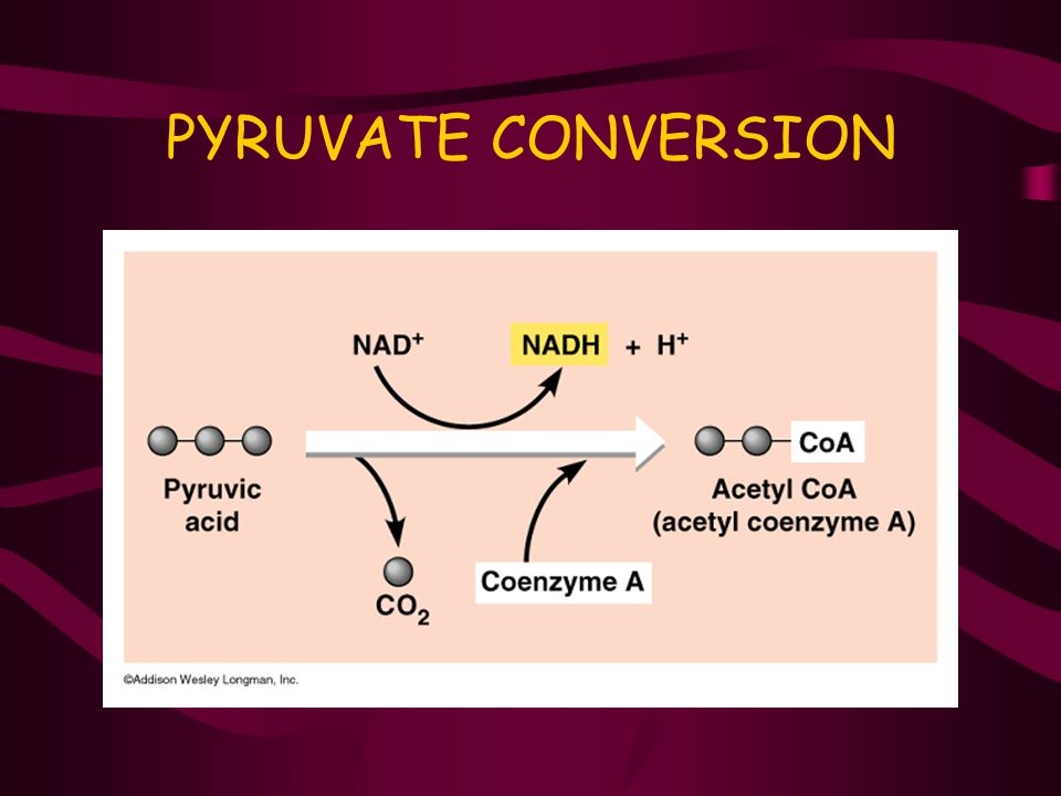 PYRUVATE CONVERSION
