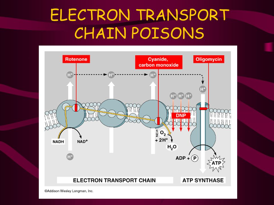 ELECTRON TRANSPORT CHAIN POISONS