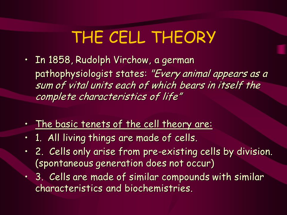 THE CELL THEORY In 1858, Rudolph Virchow, a german