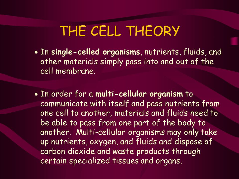 THE CELL THEORY In single-celled organisms, nutrients, fluids, and other materials simply pass into and out of the cell membrane.
