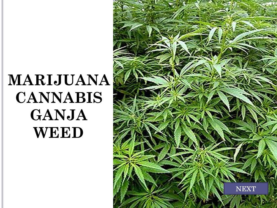 MARIJUANA CANNABIS GANJA WEED