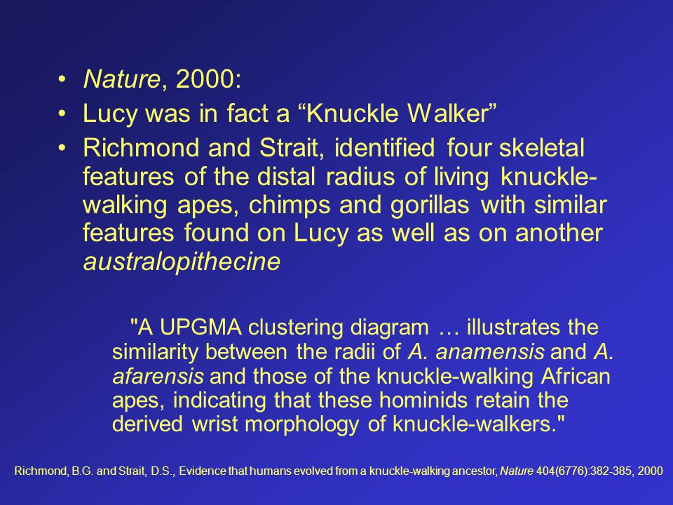Lucy was in fact a Knuckle Walker