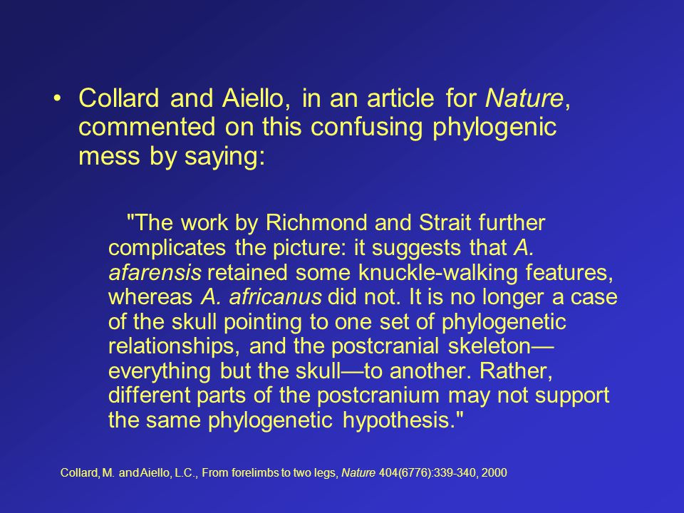 Collard and Aiello, in an article for Nature, commented on this confusing phylogenic mess by saying: