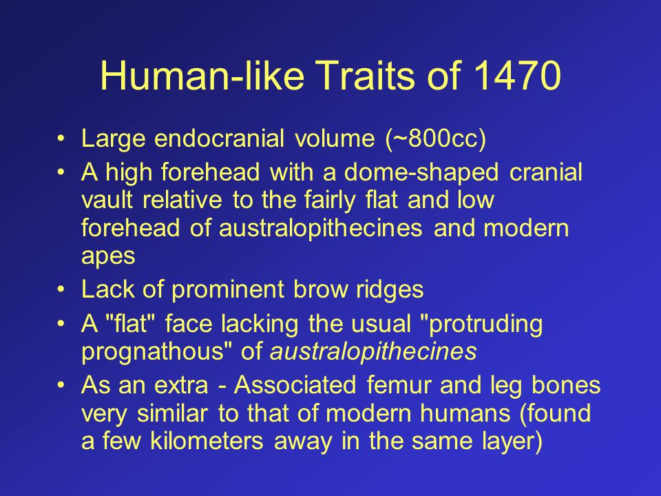 Human-like Traits of 1470 Large endocranial volume (~800cc)