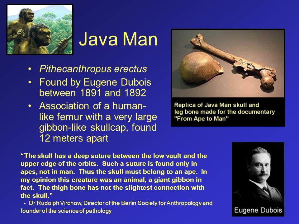 Java Man Pithecanthropus erectus