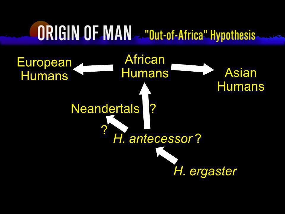 Origin of Man Out-of-Africa Hypothesis