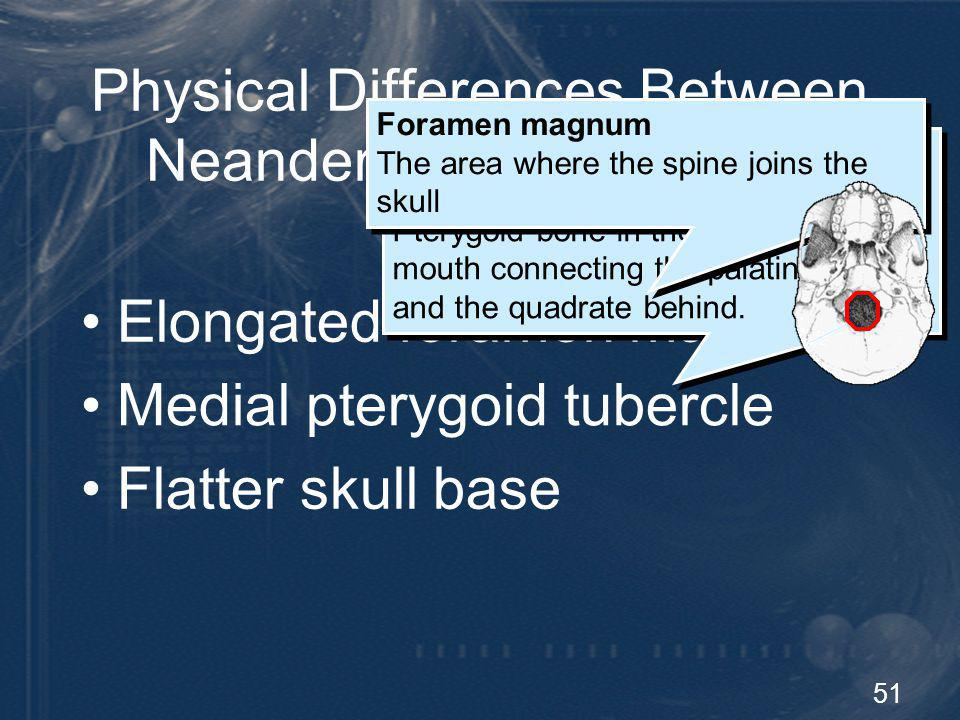 Physical Differences Between Neandertals and Humans