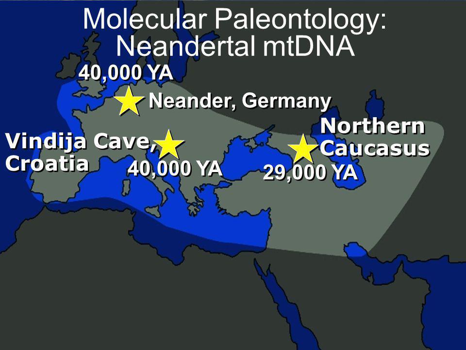 Molecular Paleontology: Neandertal mtDNA