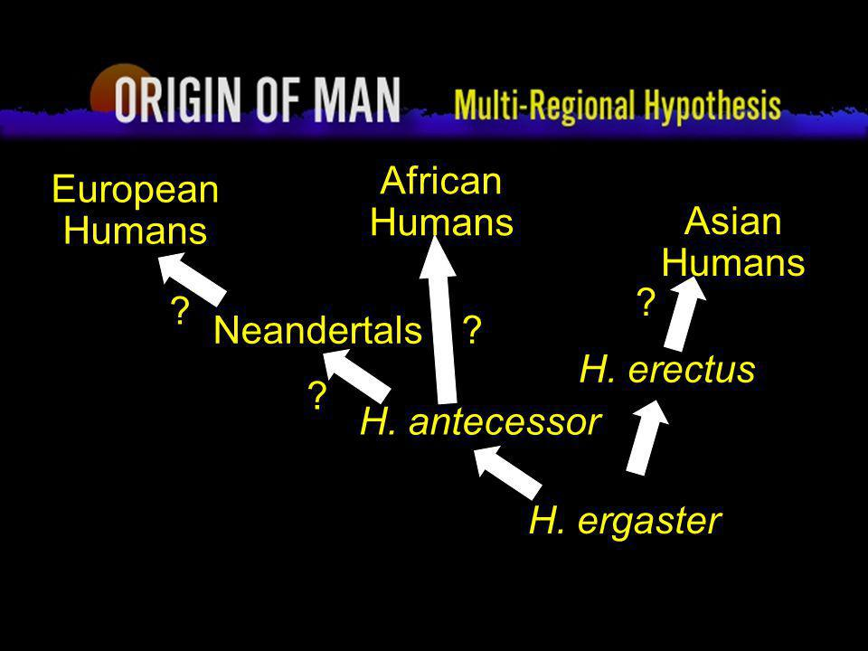 The Ancient World Unit: Multiregional Theory or Out of Africa Theory?