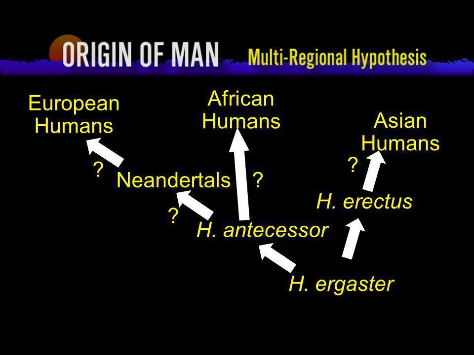Origin of Man Multi-regional Hypothesis