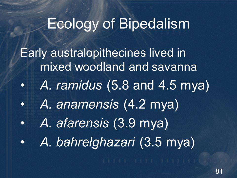 Ecology of Bipedalism A. ramidus (5.8 and 4.5 mya)
