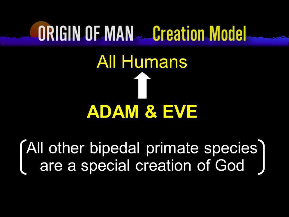 Origin of Man Creation Model