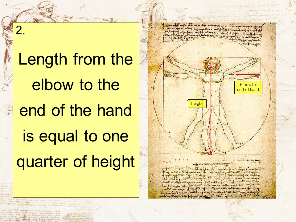 2. Length from the elbow to the end of the hand is equal to one quarter of height. Elbow to end of hand.