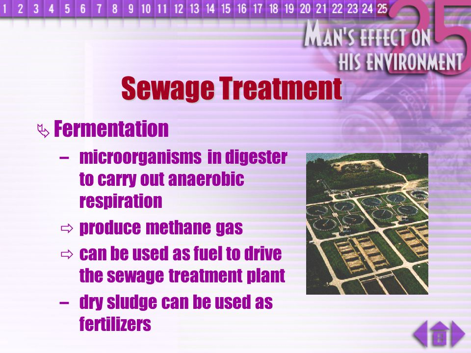 Sewage Treatment Fermentation