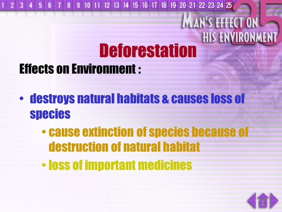Deforestation Effects on Environment :