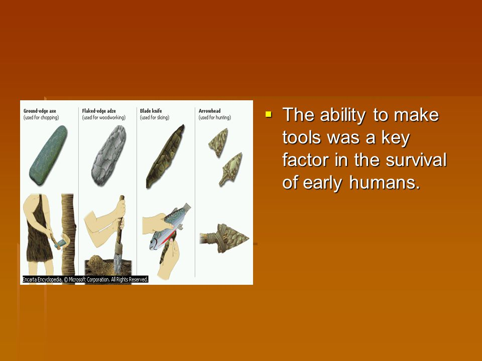 The ability to make tools was a key factor in the survival of early humans.