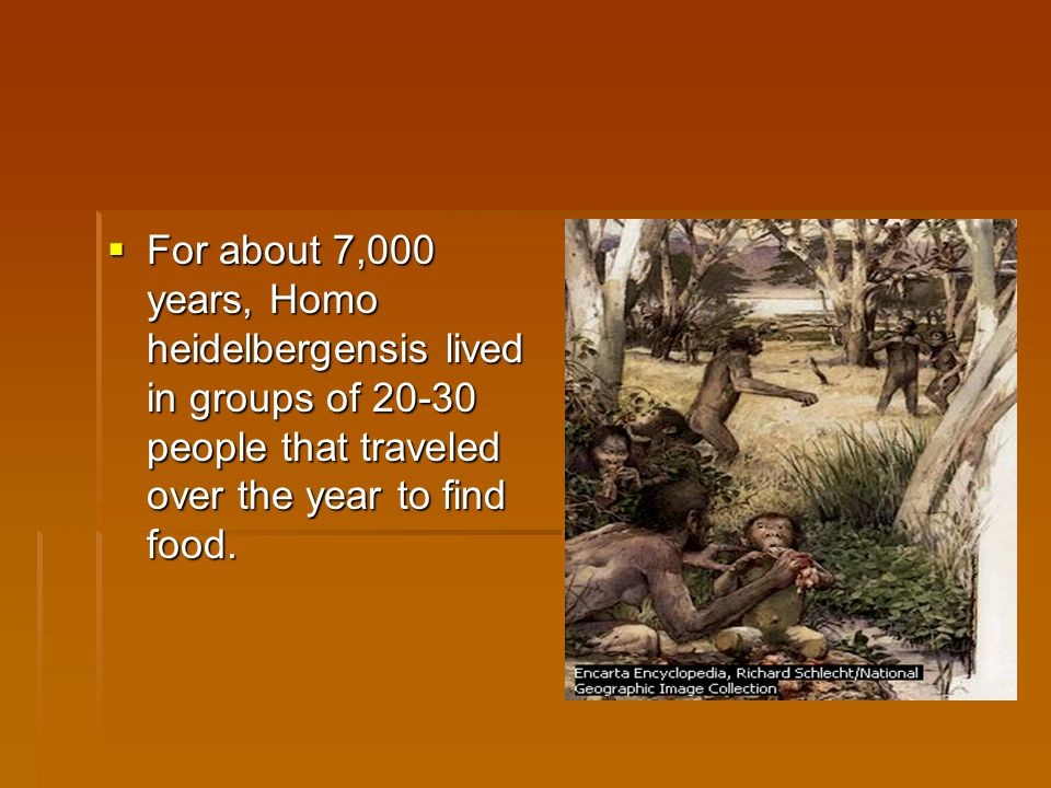 For about 7,000 years, Homo heidelbergensis lived in groups of 20-30 people that traveled over the year to find food.