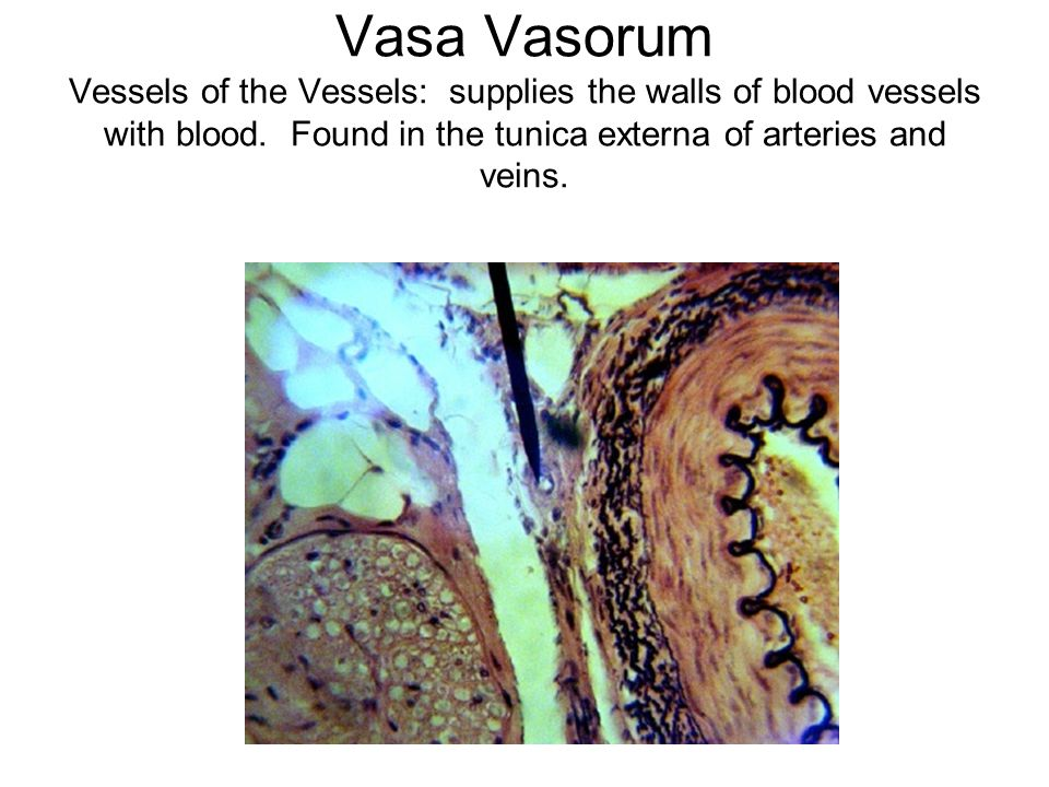 Vasa Vasorum Vessels of the Vessels: supplies the walls of blood vessels with blood.