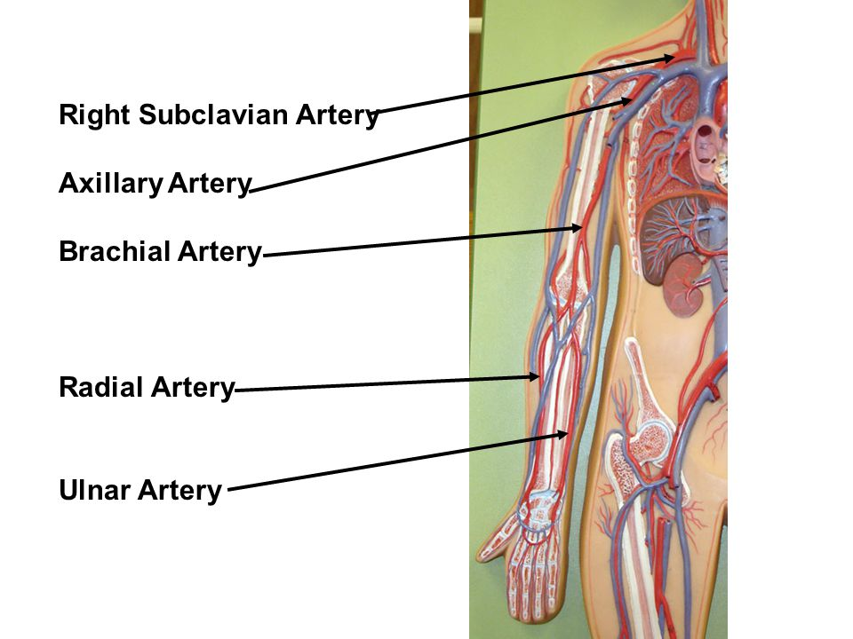 Right Subclavian Artery