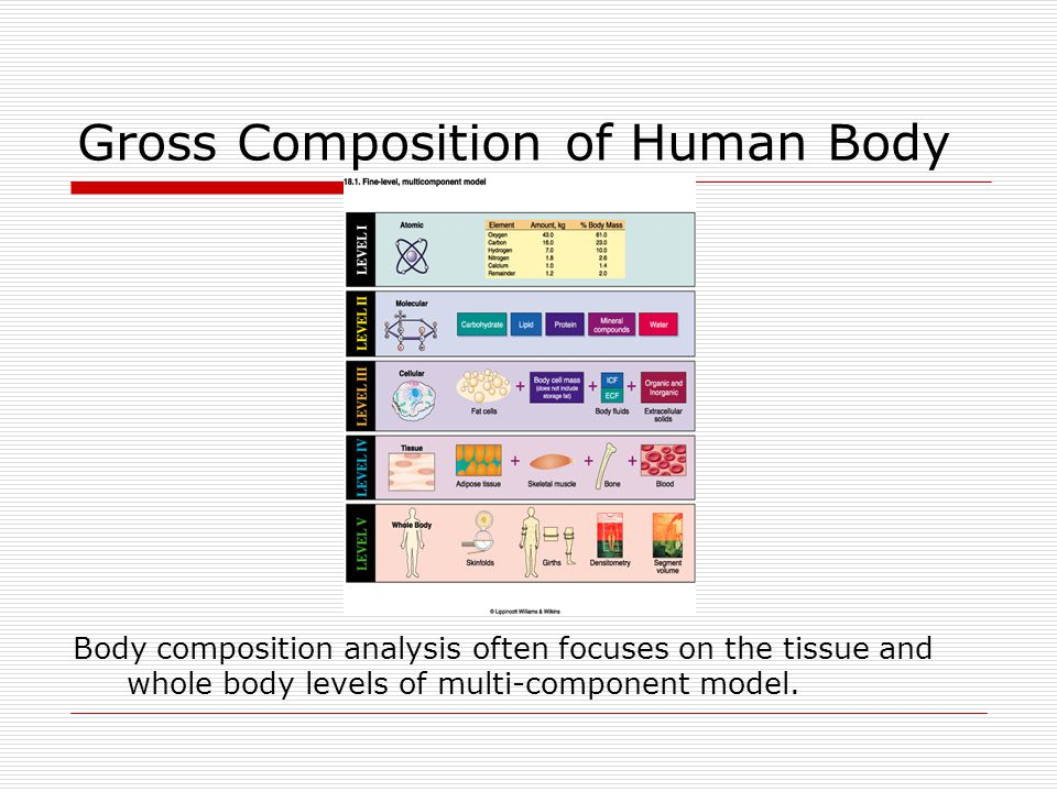 Gross Composition of Human Body