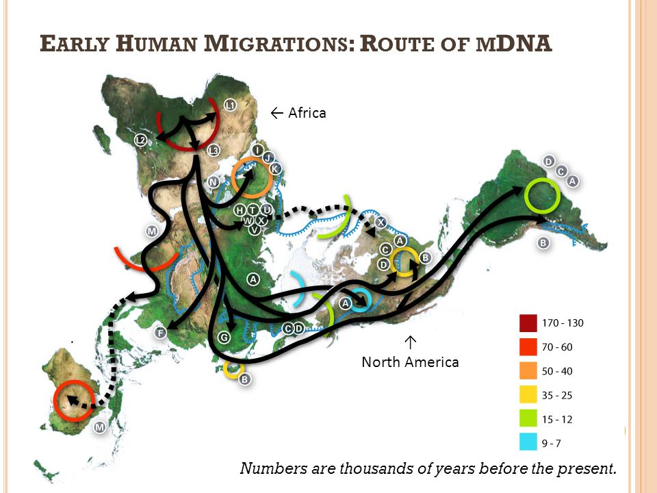 Early Human Migrations: Route of mDNA