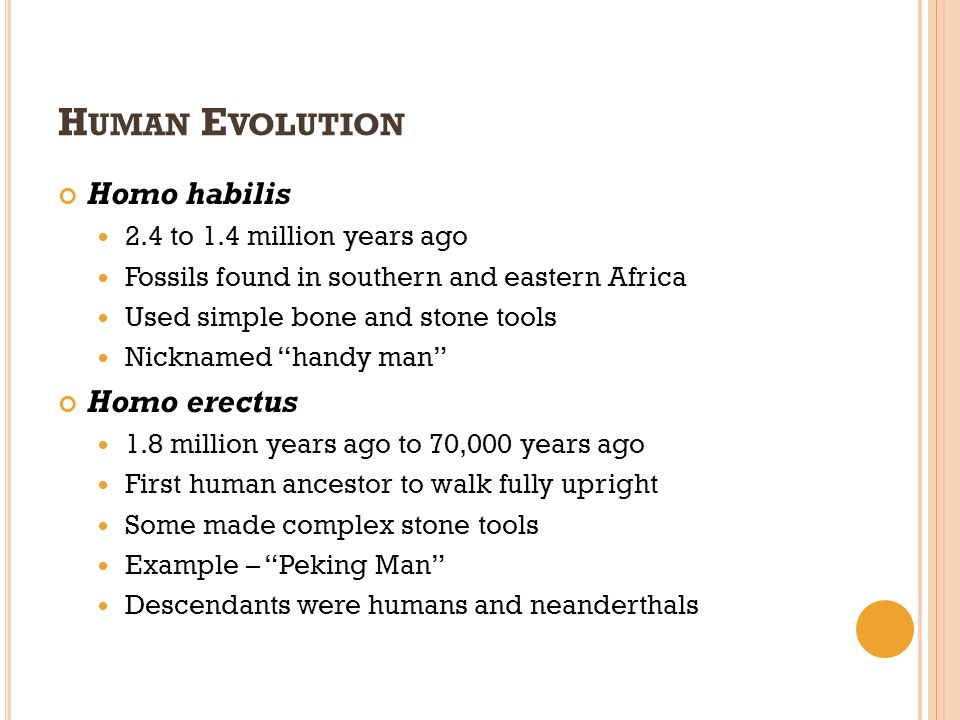 Human Evolution Homo habilis Homo erectus 2.4 to 1.4 million years ago
