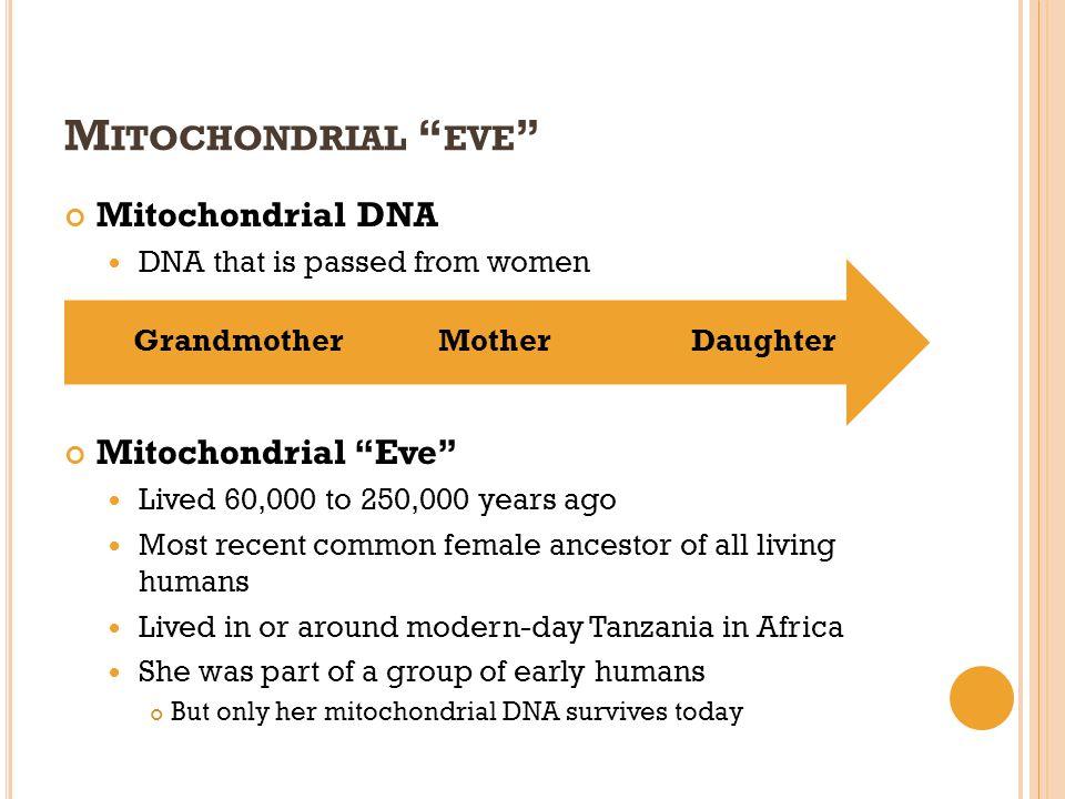 Mitochondrial eve Mitochondrial DNA Mitochondrial Eve