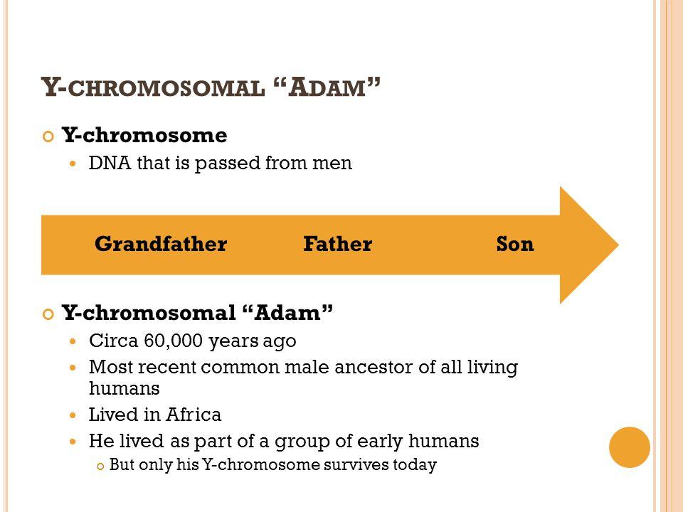 Y-chromosomal Adam Y-chromosome Y-chromosomal Adam