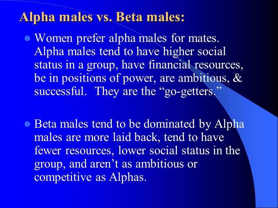 Alpha males vs. Beta males:
