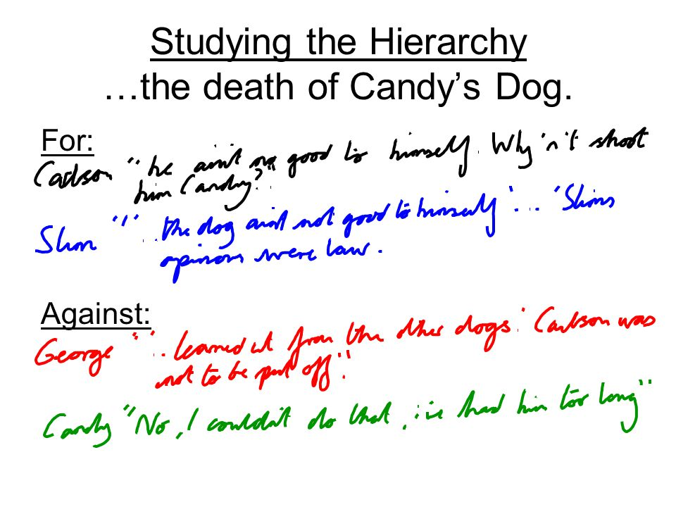 Studying the Hierarchy …the death of Candy's Dog.