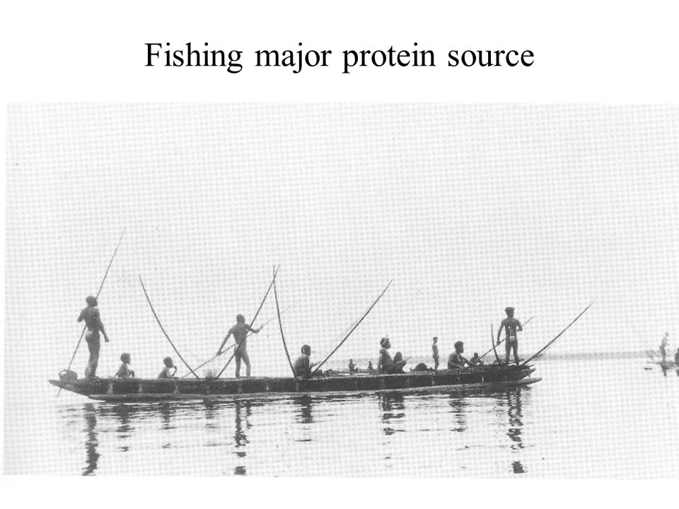 Fishing major protein source