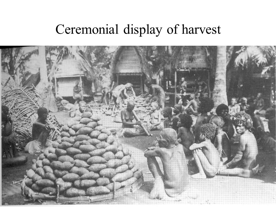 Ceremonial display of harvest