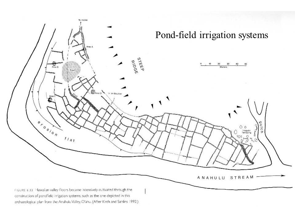 Pond-field irrigation systems