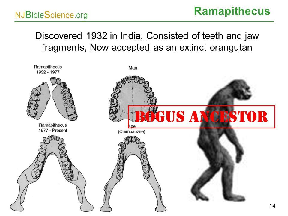 BOGUS ANCESTOR Ramapithecus