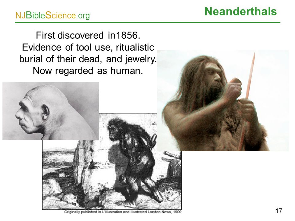 Neanderthals First discovered in1856. Evidence of tool use, ritualistic burial of their dead, and jewelry. Now regarded as human.
