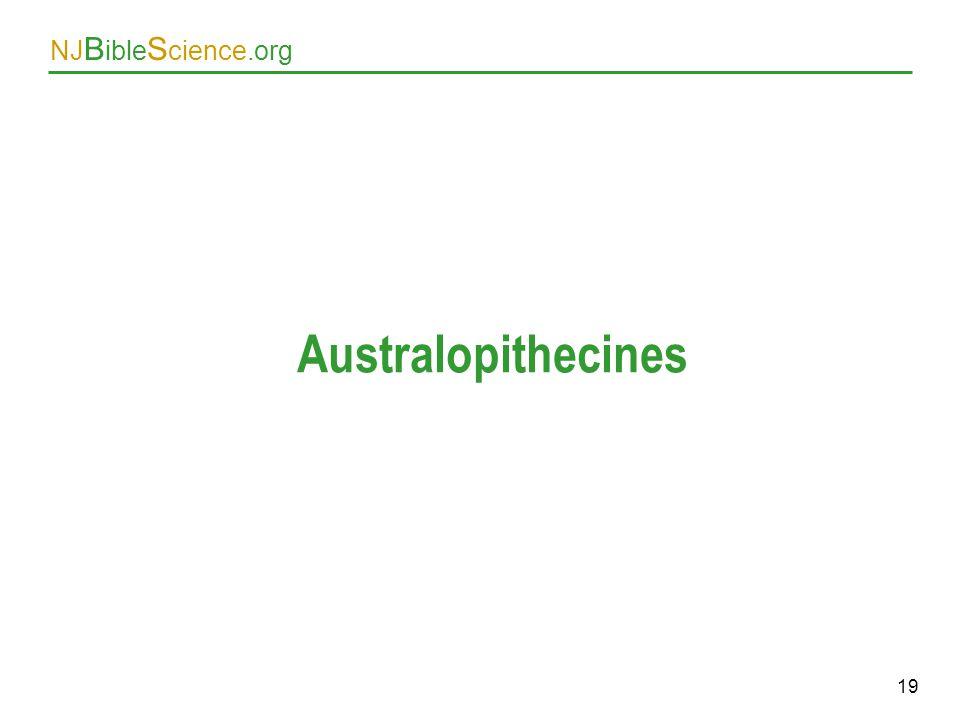 Australopithecines As above. 19 19