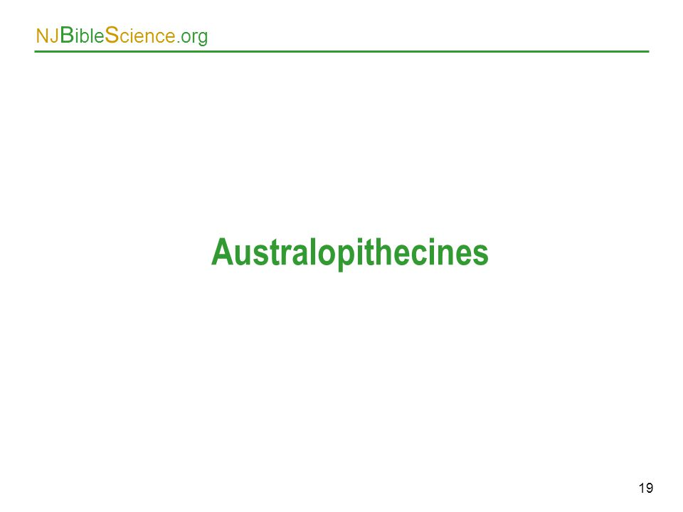 Australopithecines As above