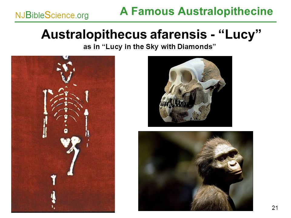 A Famous Australopithecine