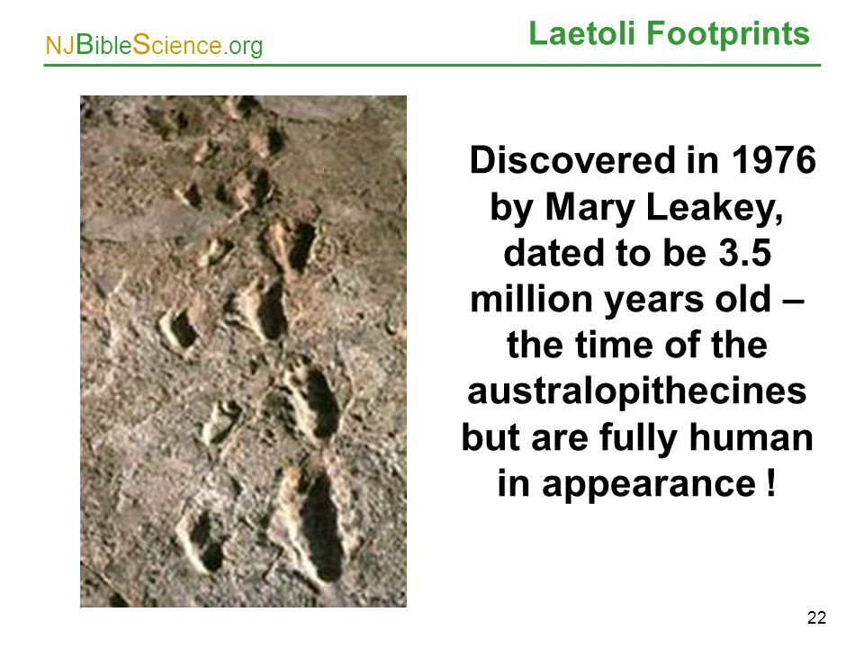 Laetoli Footprints