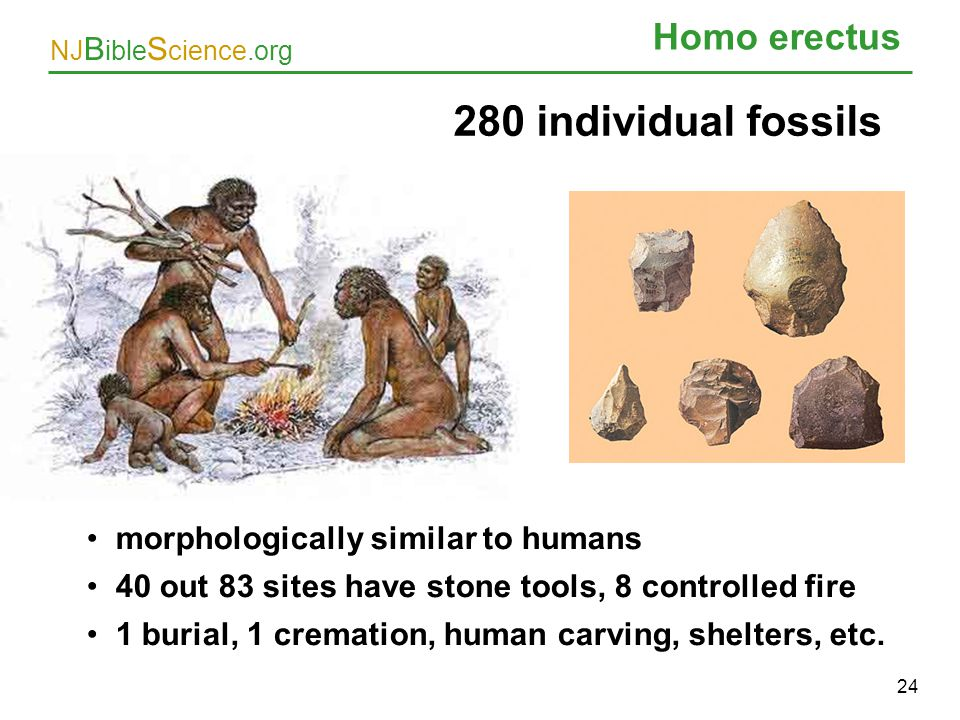 280 individual fossils Homo erectus morphologically similar to humans