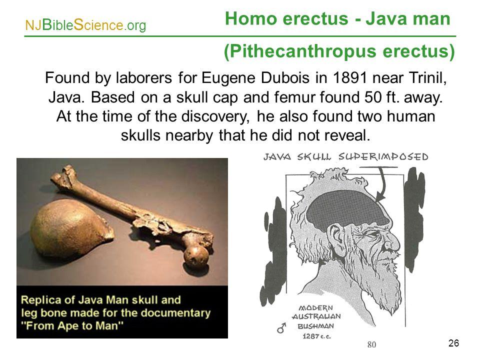 (Pithecanthropus erectus)