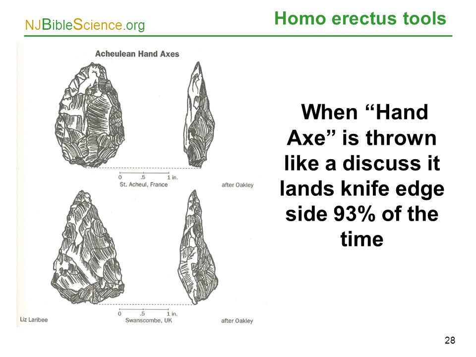 Homo erectus tools When Hand Axe is thrown like a discuss it lands knife edge side 93% of the time.