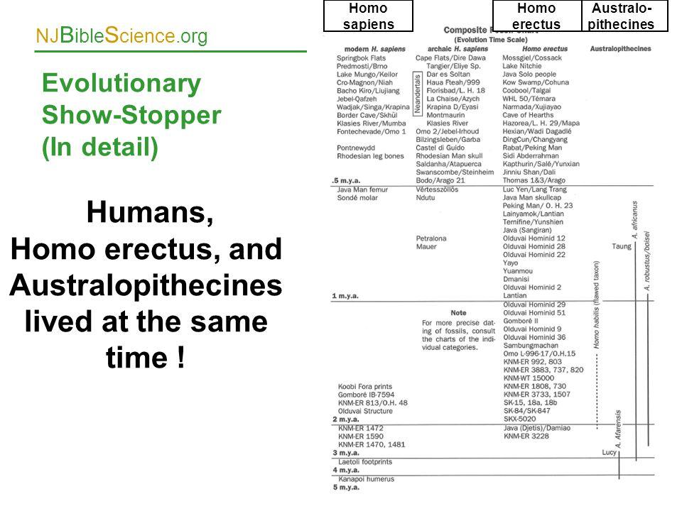 Evolutionary Show-Stopper (In detail)