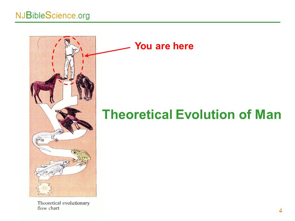 Theoretical Evolution of Man