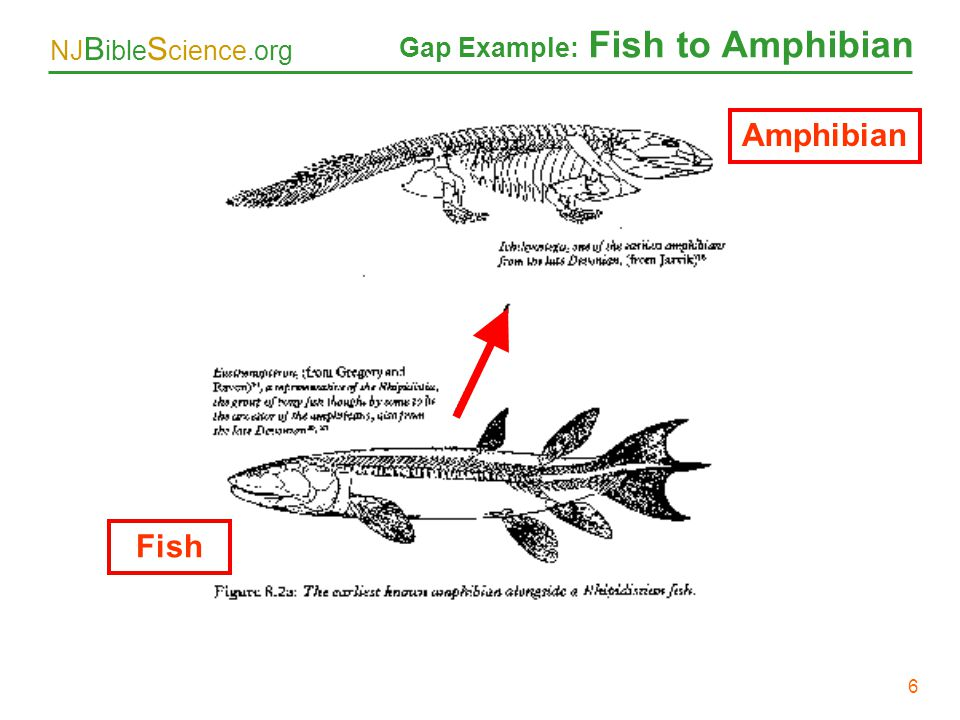 Gap Example: Fish to Amphibian