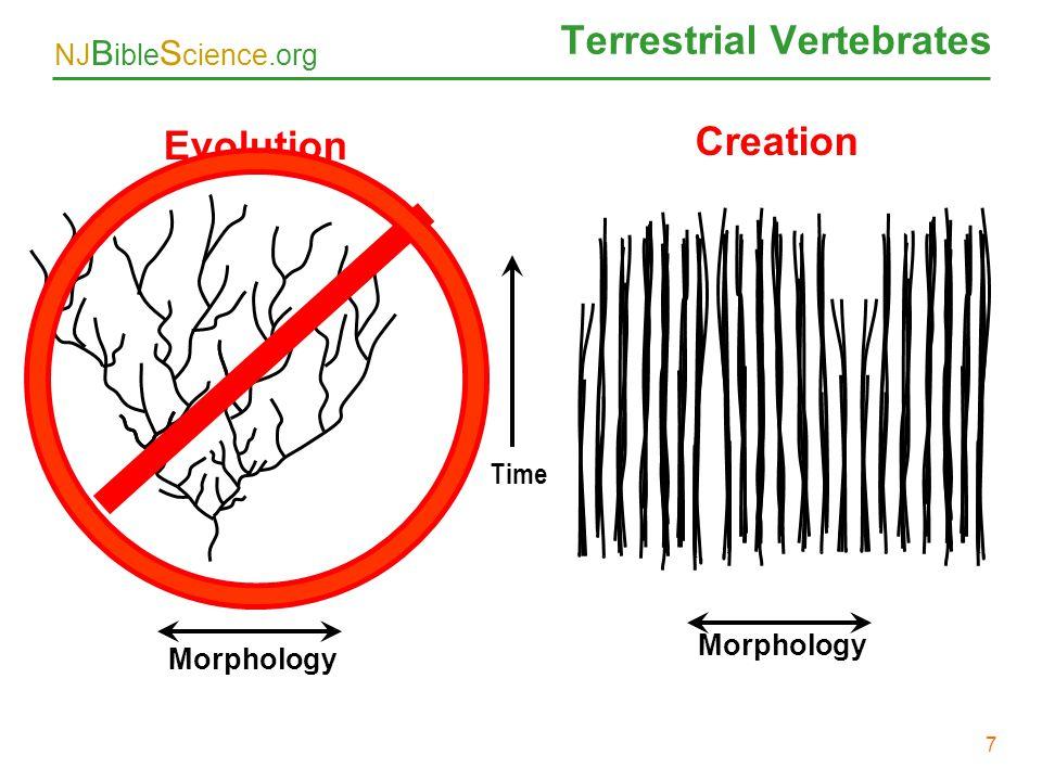Terrestrial Vertebrates