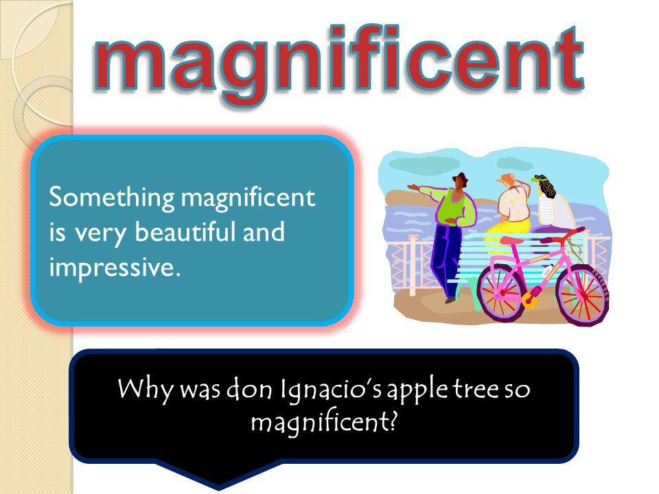 Why was don Ignacio's apple tree so magnificent