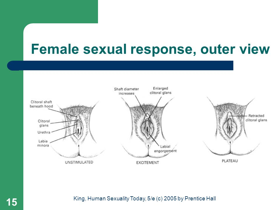 Female sexual response, outer view